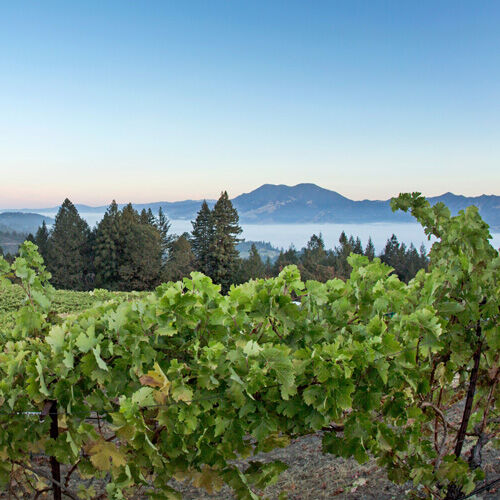 Sterling Vineyard Landscape View