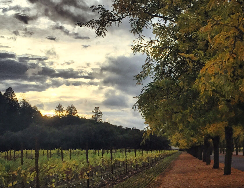 Larsen Vineyards in Calistoga