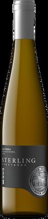 2019 Malvasia Bianca